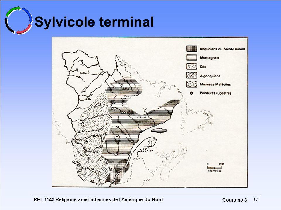 Sylvicole terminal