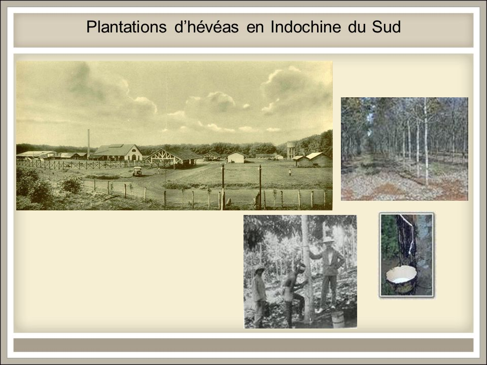Plantations d'hévéas en Indochine du Sud