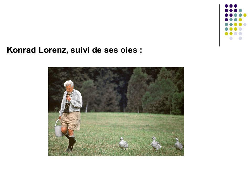 Konrad Lorenz, suivi de ses oies :