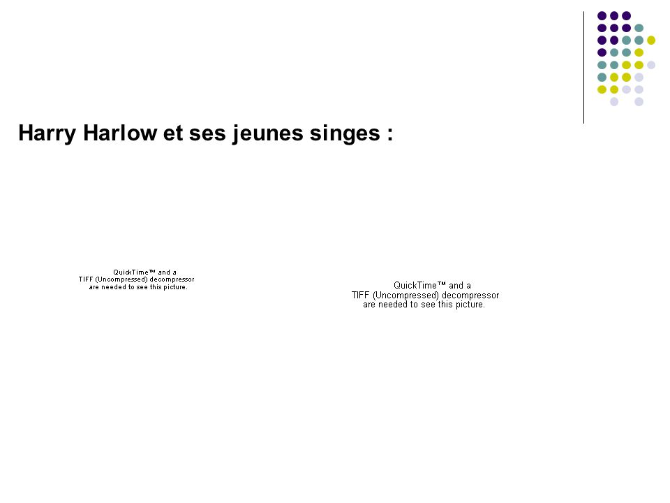 Harry Harlow et ses jeunes singes :