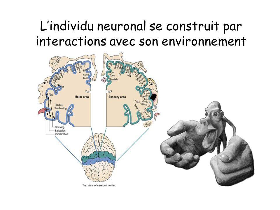L'individu neuronal se construit par interactions avec son environnement