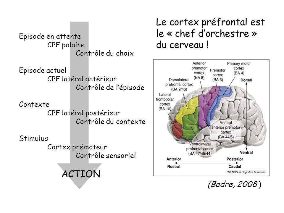 Le cortex préfrontal est le « chef d'orchestre » du cerveau !