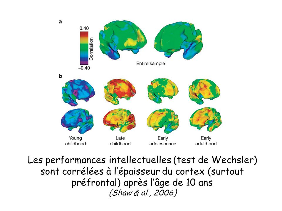 Les performances intellectuelles (test de Wechsler)