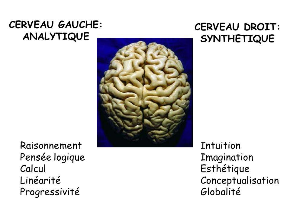 CERVEAU GAUCHE: ANALYTIQUE. CERVEAU DROIT: SYNTHETIQUE. Raisonnement. Pensée logique. Calcul. Linéarité.