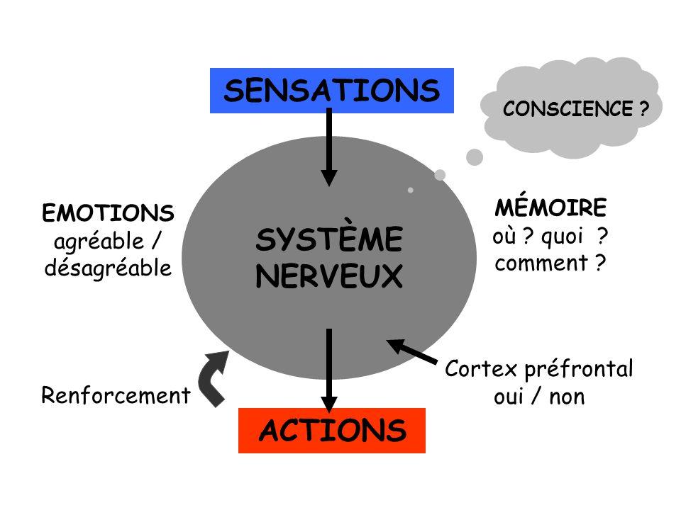 SENSATIONS SYSTÈME NERVEUX ACTIONS