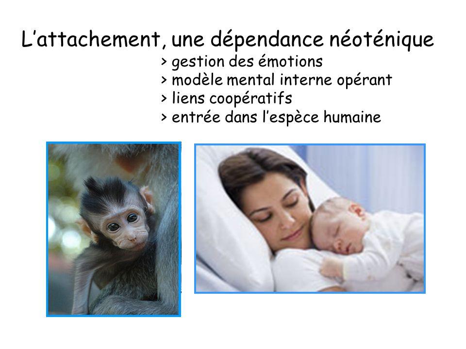 L'attachement, une dépendance néoténique. > gestion des émotions
