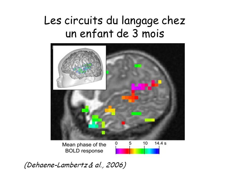 Les circuits du langage chez un enfant de 3 mois