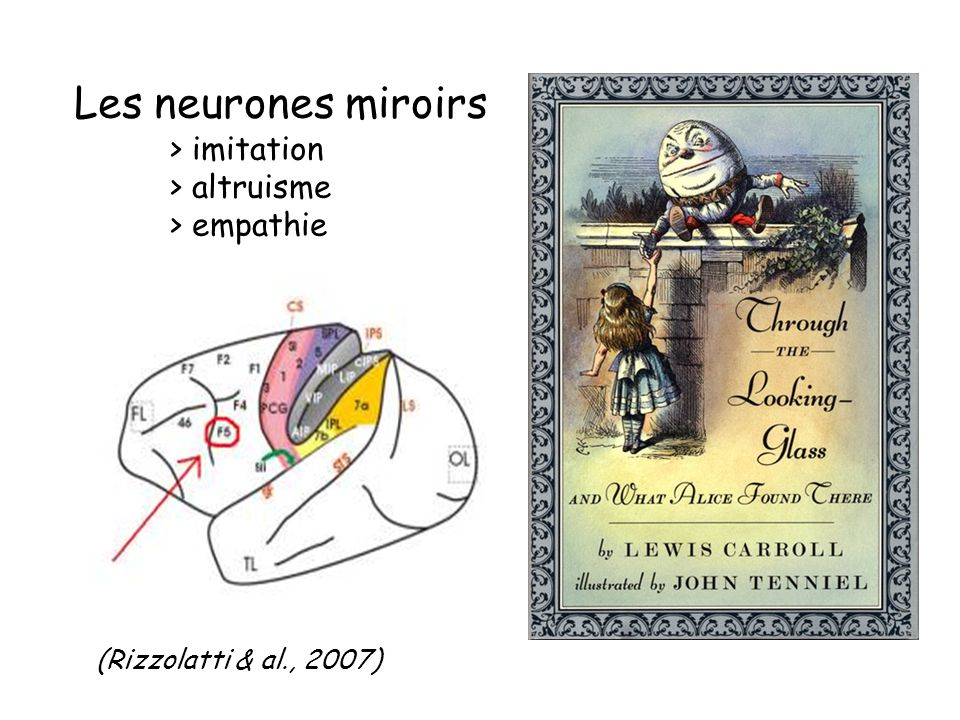 Devenir humain du g ne l ordre mental ppt video for Neurones miroir