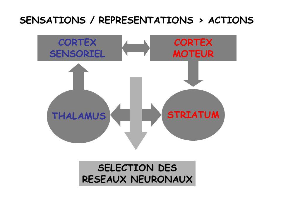 SENSATIONS / REPRESENTATIONS > ACTIONS