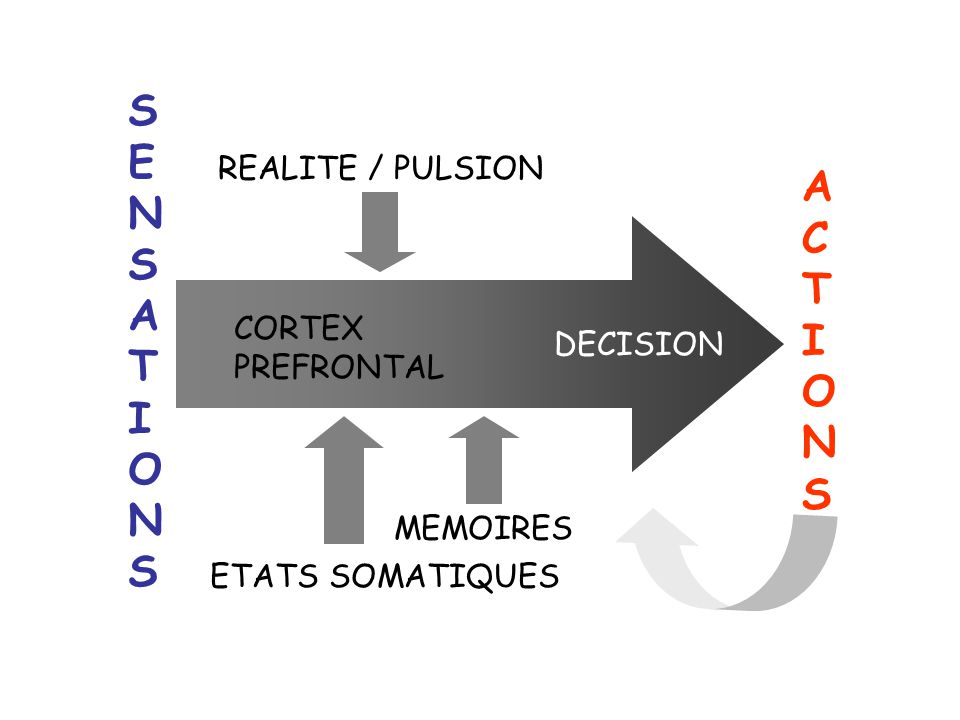 SENSATIONS ACTIONS REALITE / PULSION CORTEX PREFRONTAL DECISION
