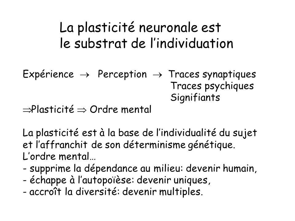 La plasticité neuronale est le substrat de l'individuation