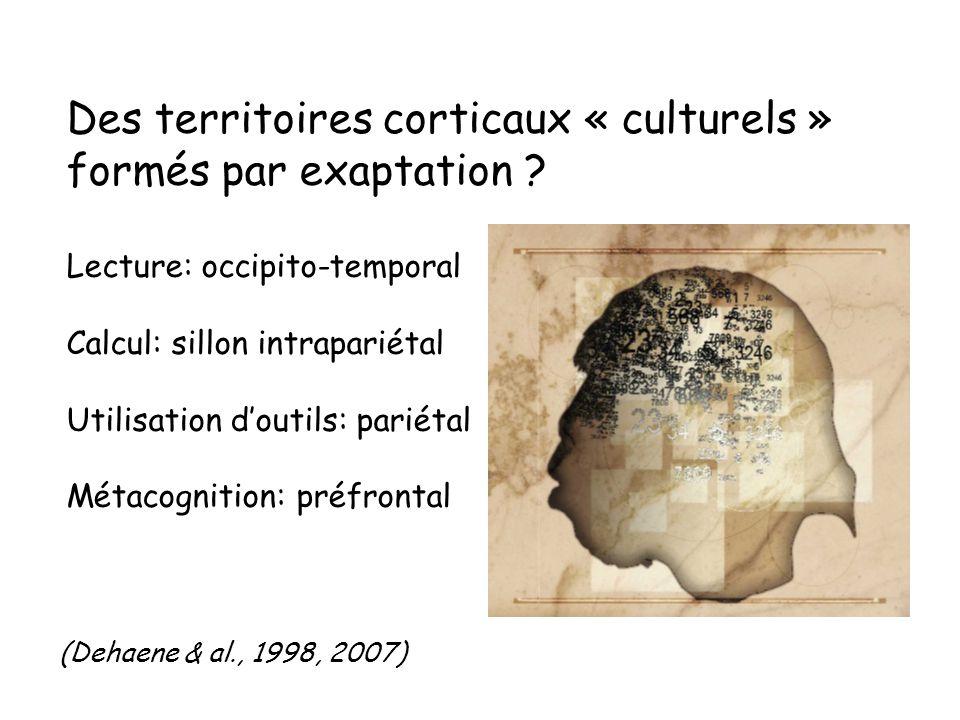 Des territoires corticaux « culturels » formés par exaptation