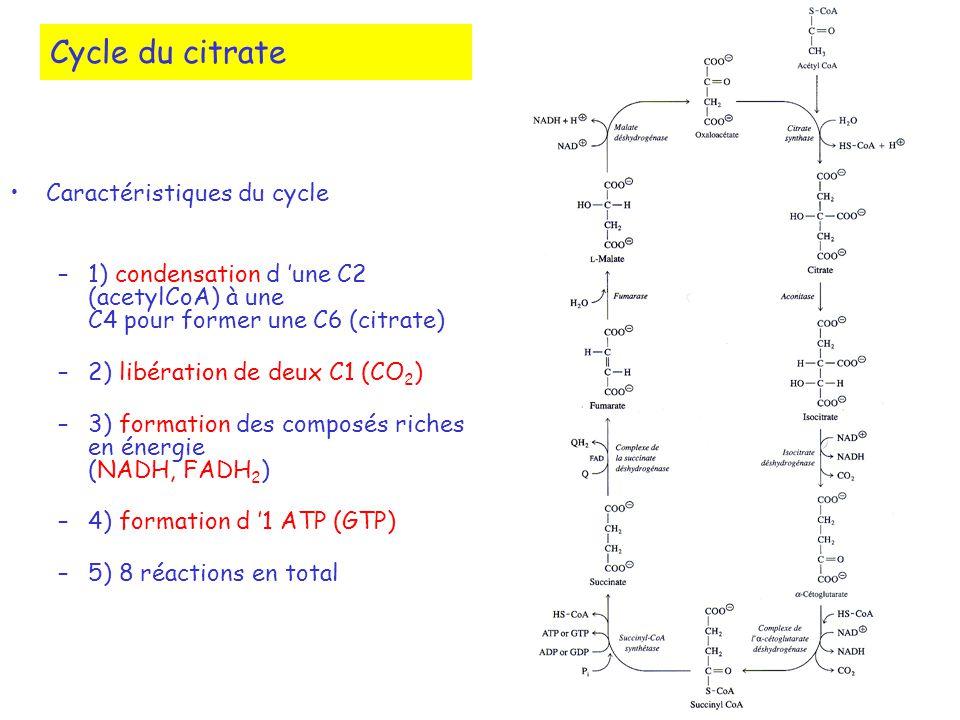 Cycle du citrate Caractéristiques du cycle