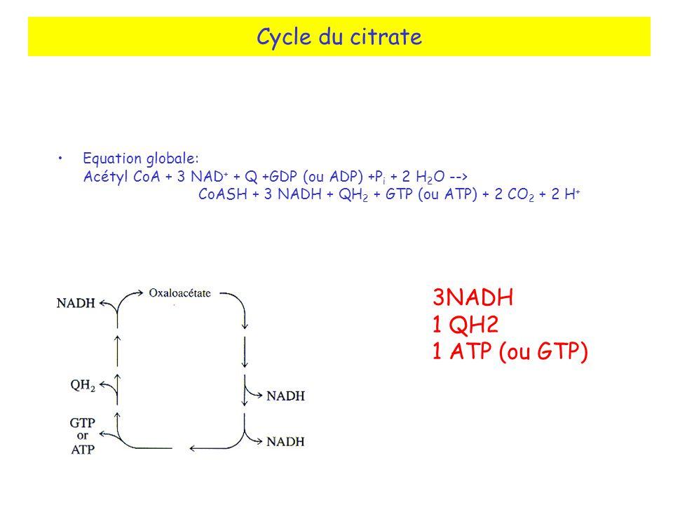 Cycle du citrate 3NADH 1 QH2 1 ATP (ou GTP)