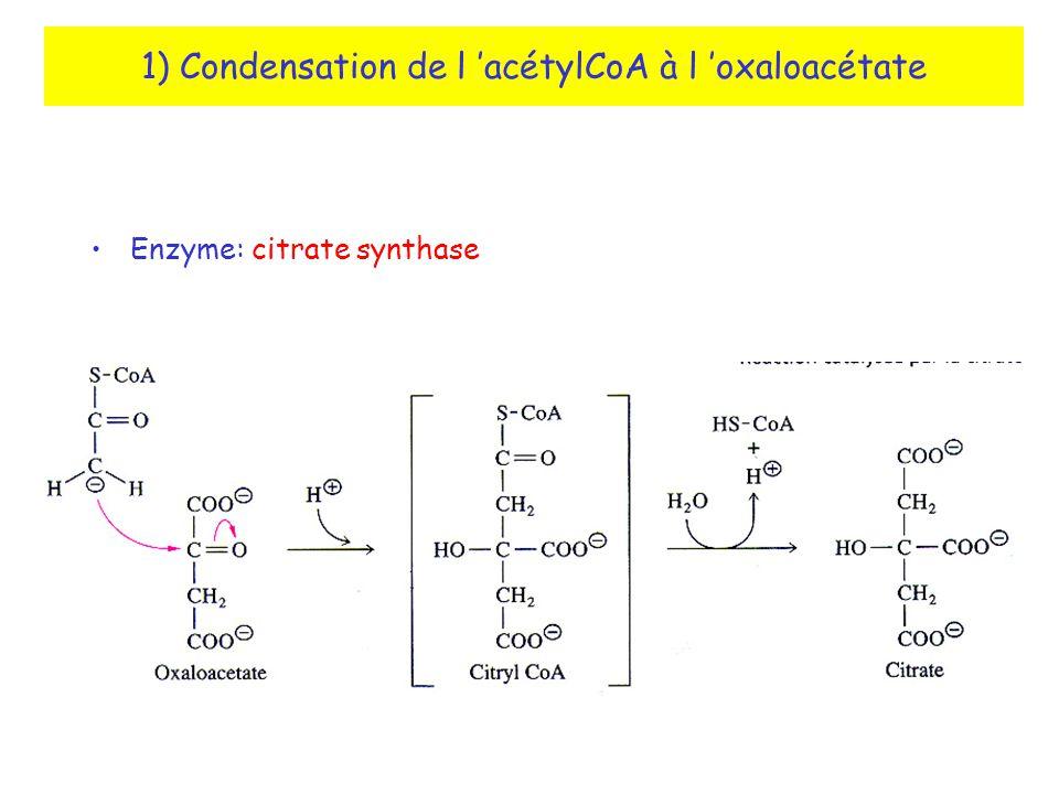 1) Condensation de l 'acétylCoA à l 'oxaloacétate