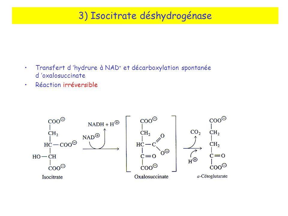 3) Isocitrate déshydrogénase