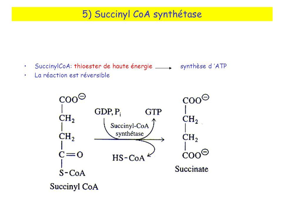 5) Succinyl CoA synthétase