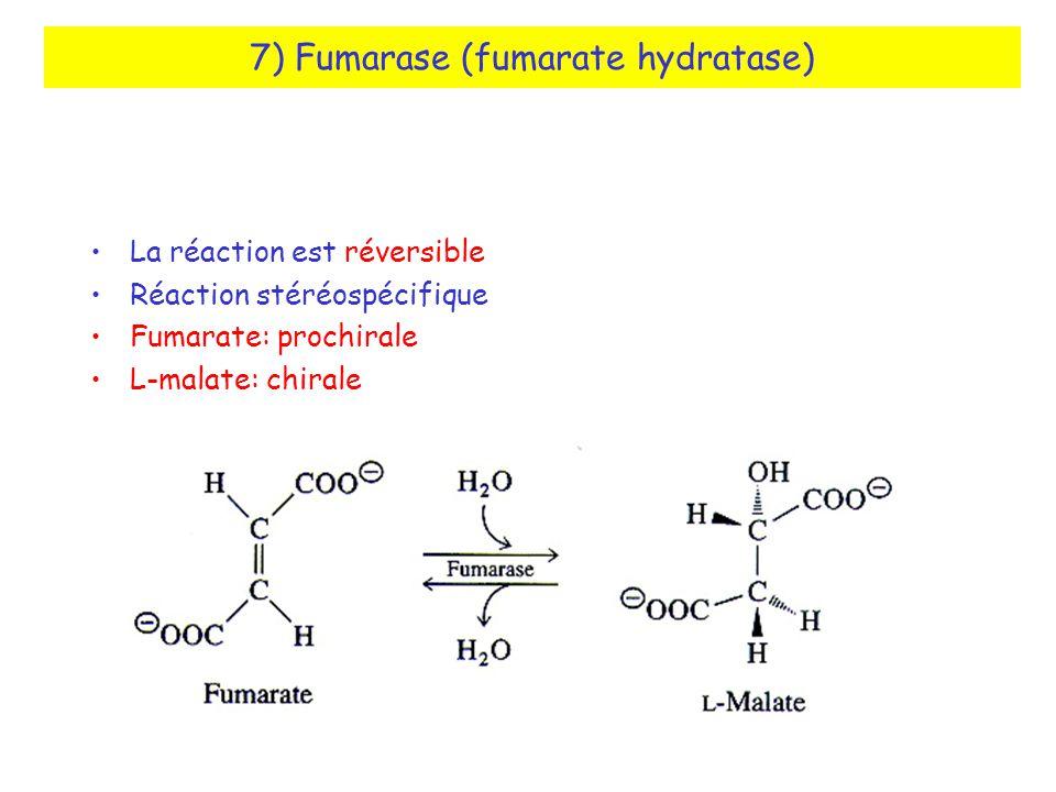 7) Fumarase (fumarate hydratase)