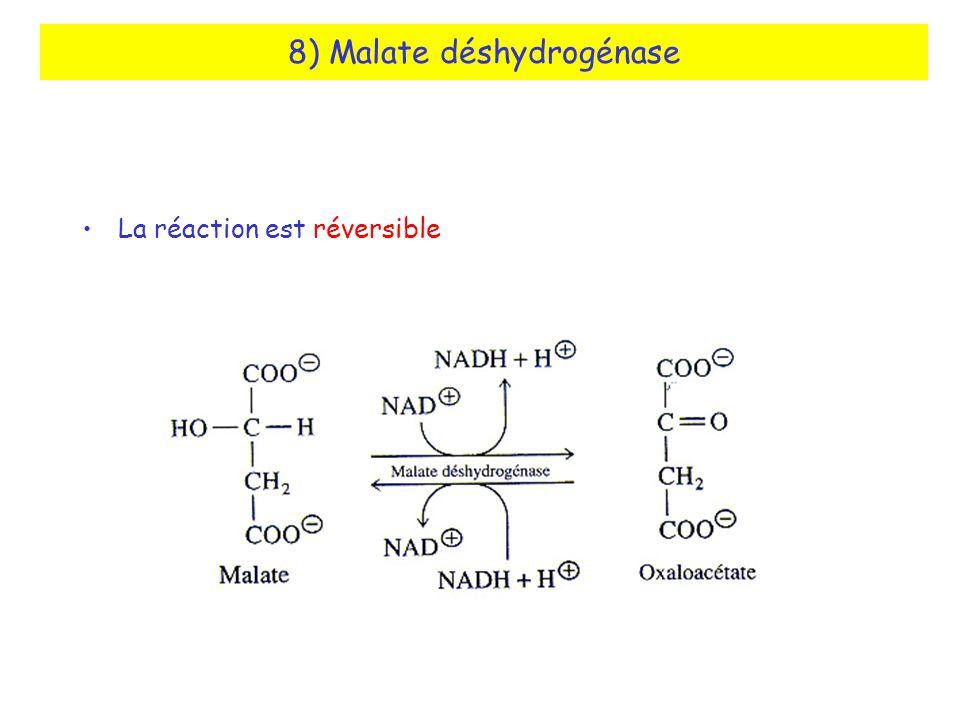 8) Malate déshydrogénase