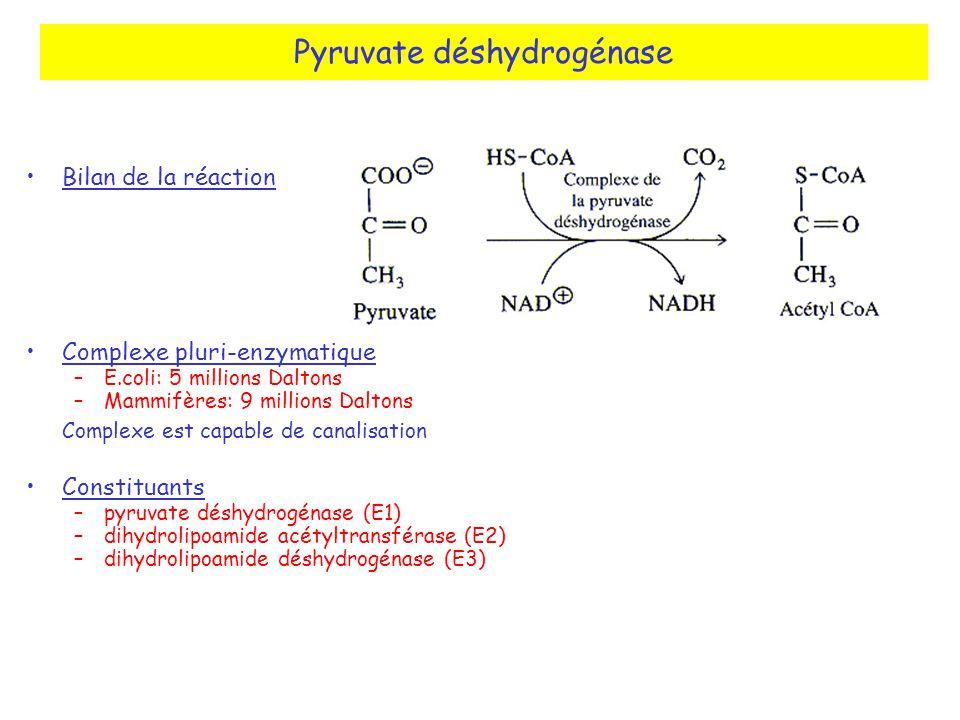 Pyruvate déshydrogénase