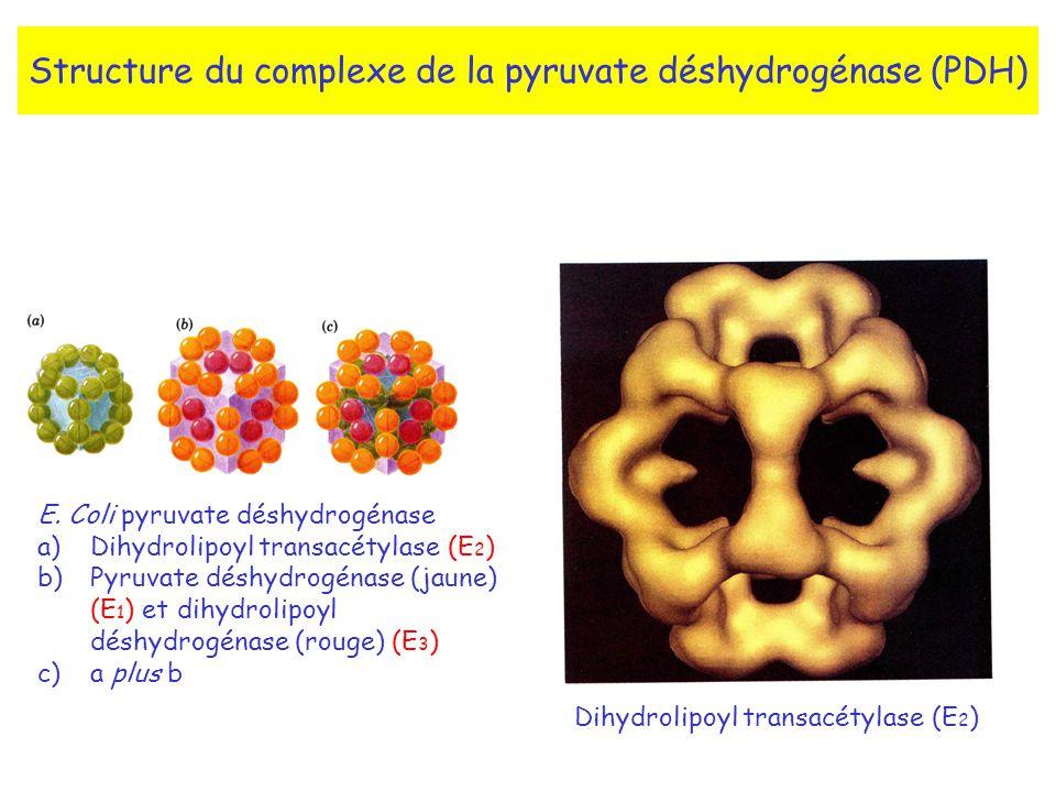 Structure du complexe de la pyruvate déshydrogénase (PDH)