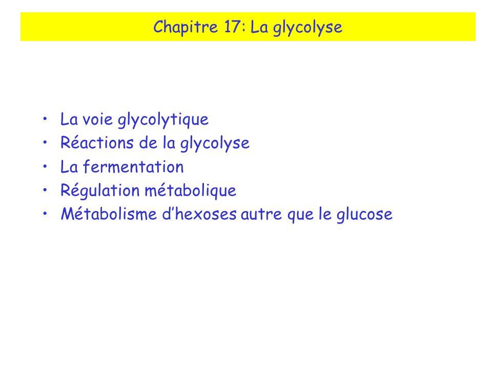 Chapitre 17: La glycolyse