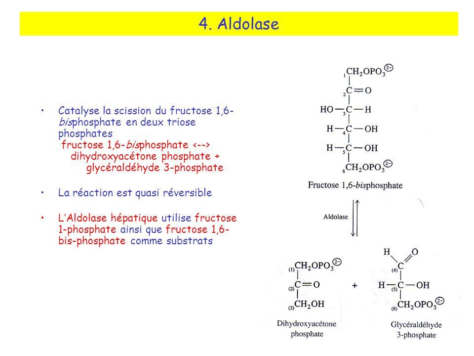 4. Aldolase