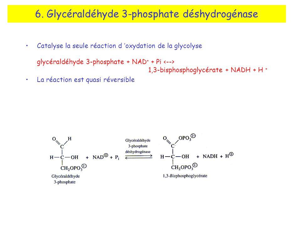 6. Glycéraldéhyde 3-phosphate déshydrogénase