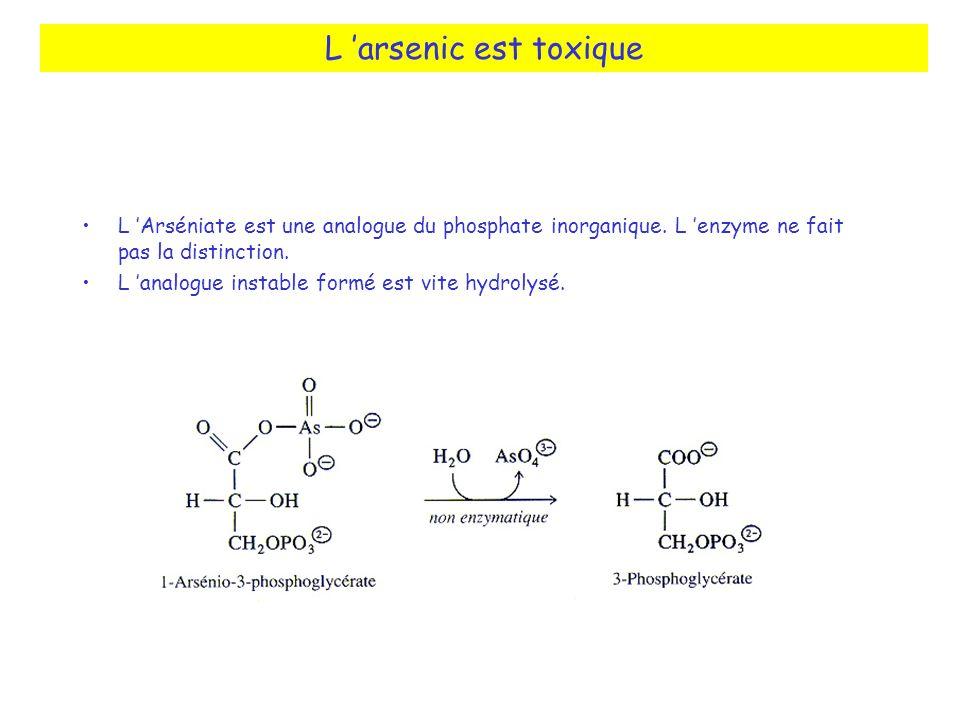 L 'arsenic est toxique L 'Arséniate est une analogue du phosphate inorganique. L 'enzyme ne fait pas la distinction.