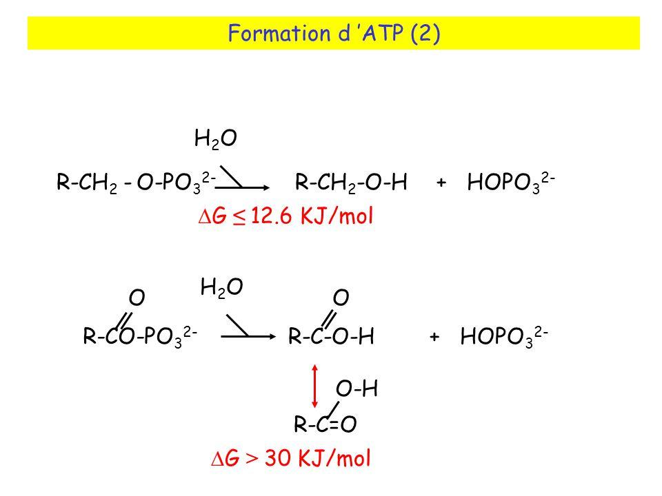 Formation d 'ATP (2) H2O. R-CH2 - O-PO32- R-CH2-O-H + HOPO32- DG ≤ 12.6 KJ/mol.