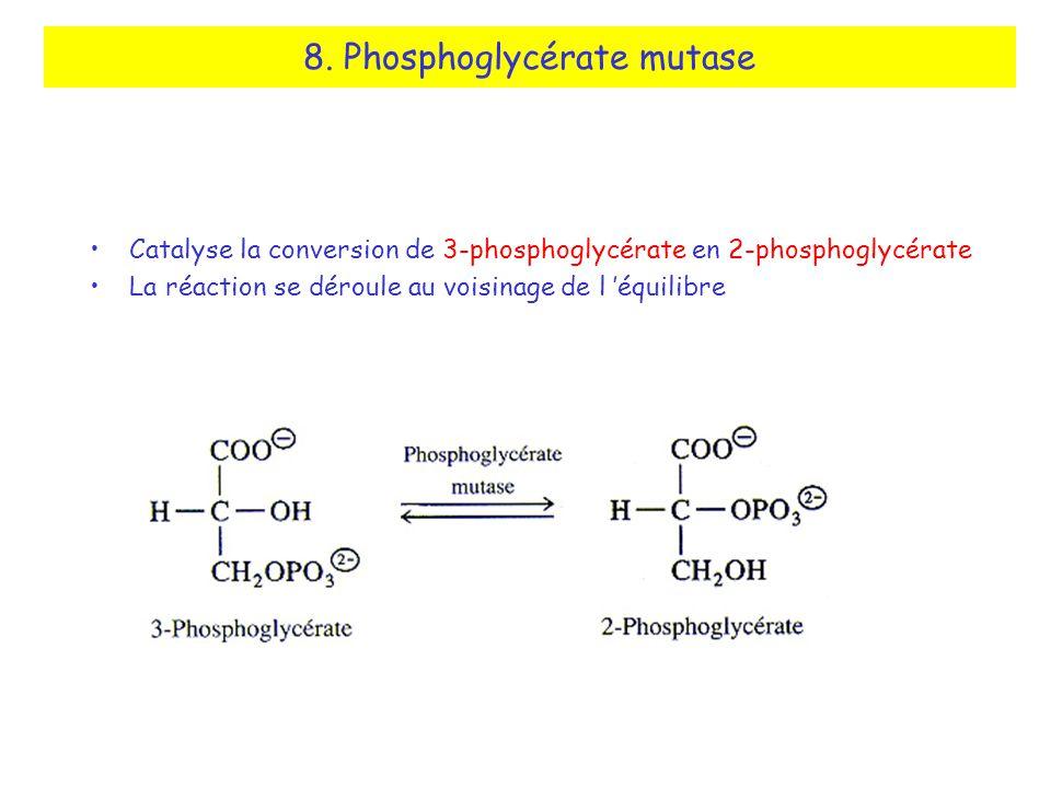 8. Phosphoglycérate mutase