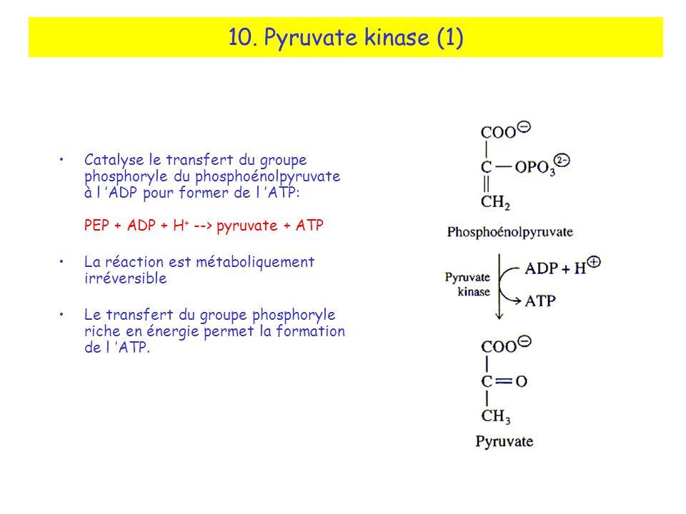 10. Pyruvate kinase (1)