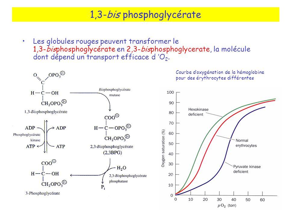 1,3-bis phosphoglycérate