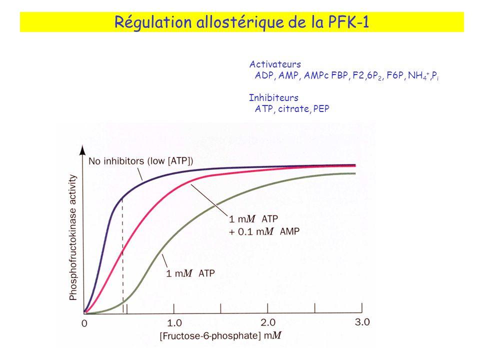 Régulation allostérique de la PFK-1