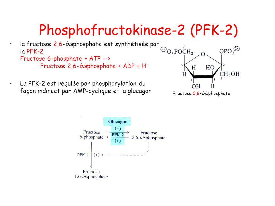 Phosphofructokinase-2 (PFK-2)