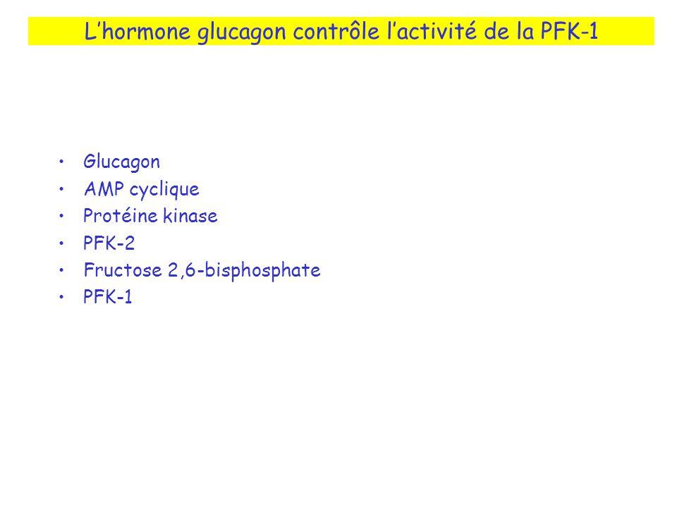 L'hormone glucagon contrôle l'activité de la PFK-1
