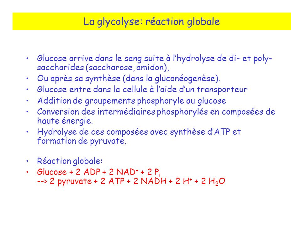 La glycolyse: réaction globale