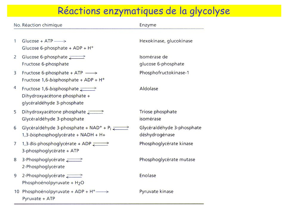Réactions enzymatiques de la glycolyse