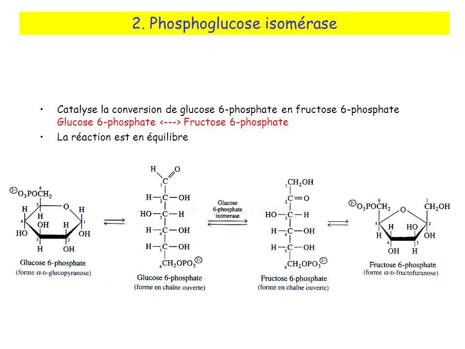 2. Phosphoglucose isomérase