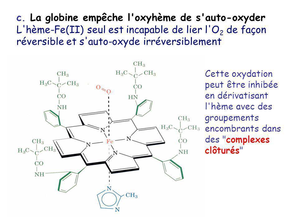 c. La globine empêche l oxyhème de s auto-oxyder