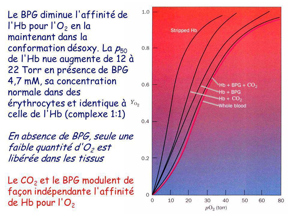 Le BPG diminue l affinité de l Hb pour l O2 en la maintenant dans la conformation désoxy. La p50 de l Hb nue augmente de 12 à 22 Torr en présence de BPG 4,7 mM, sa concentration normale dans des érythrocytes et identique à celle de l Hb (complexe 1:1)