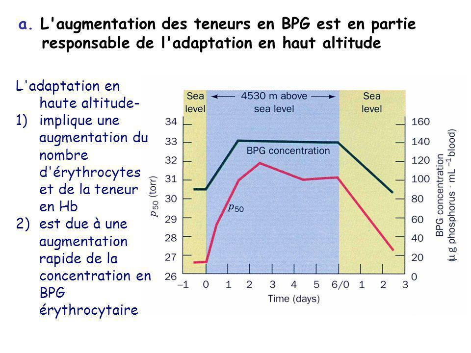 a. L augmentation des teneurs en BPG est en partie responsable de l adaptation en haut altitude