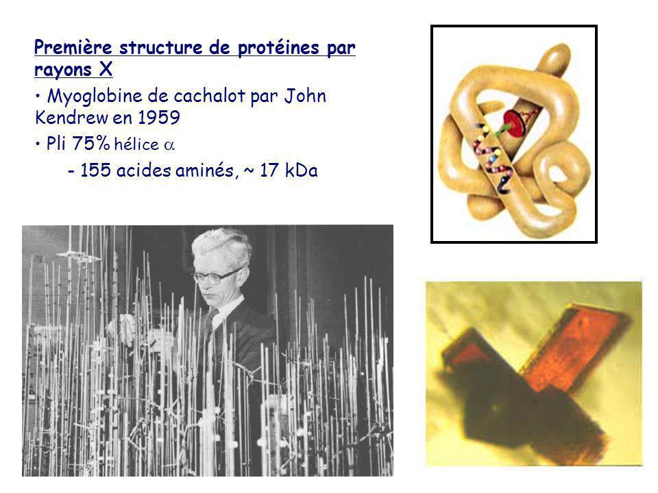 Première structure de protéines par rayons X