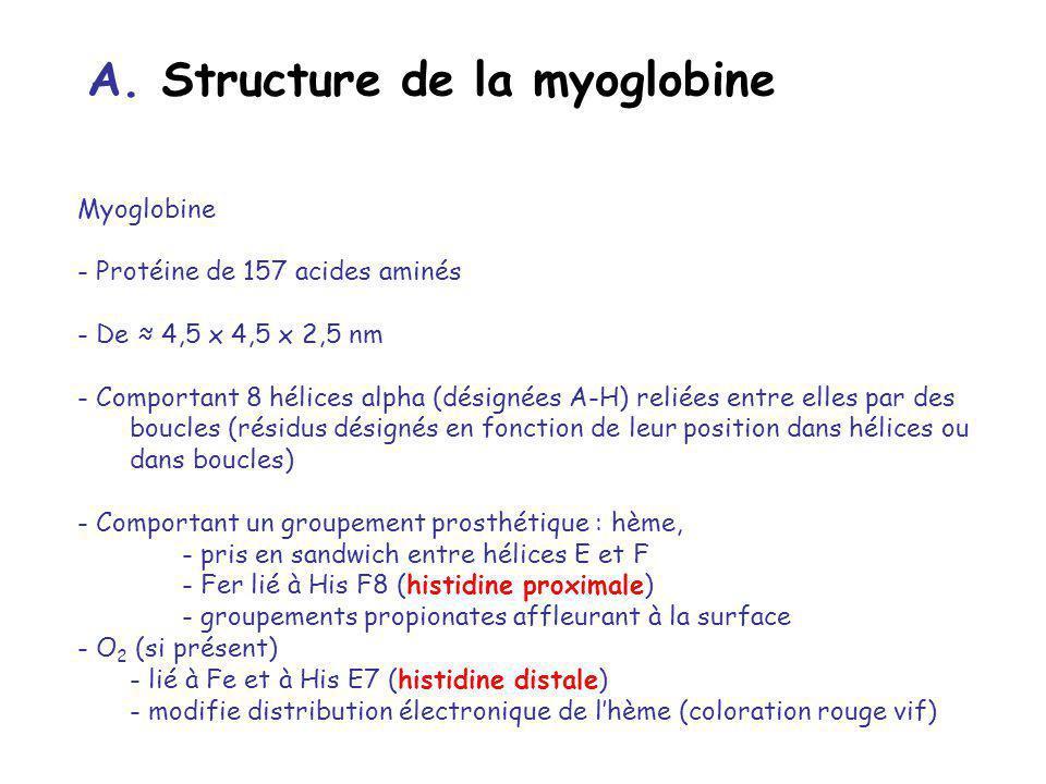 A. Structure de la myoglobine