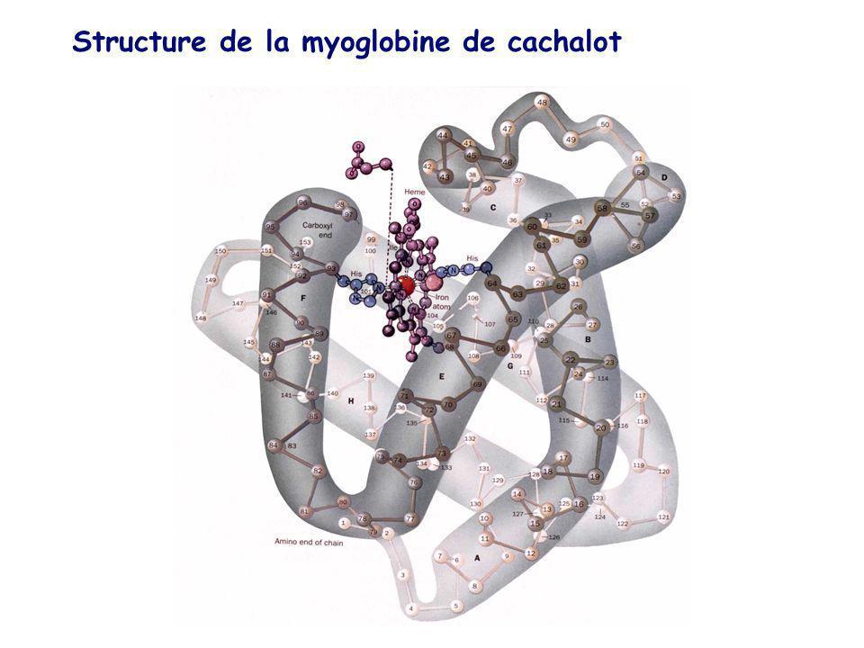 Structure de la myoglobine de cachalot