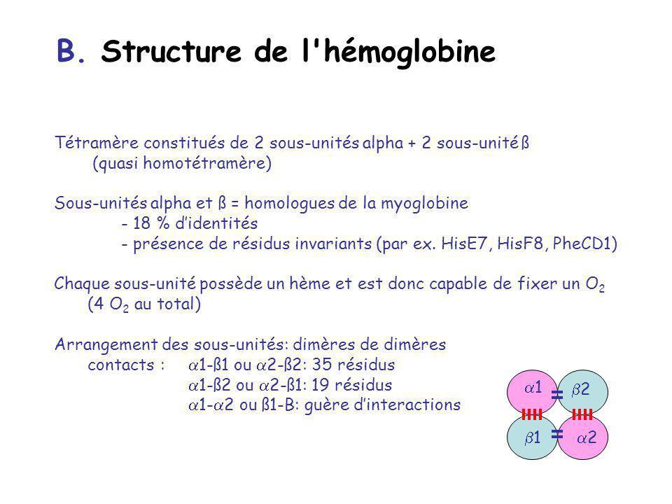 B. Structure de l hémoglobine