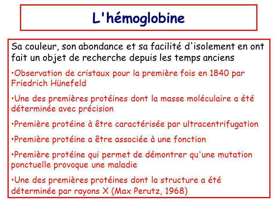 L hémoglobine Sa couleur, son abondance et sa facilité d isolement en ont fait un objet de recherche depuis les temps anciens.