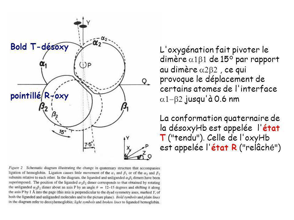 Bold T-désoxy pointillé R-oxy.