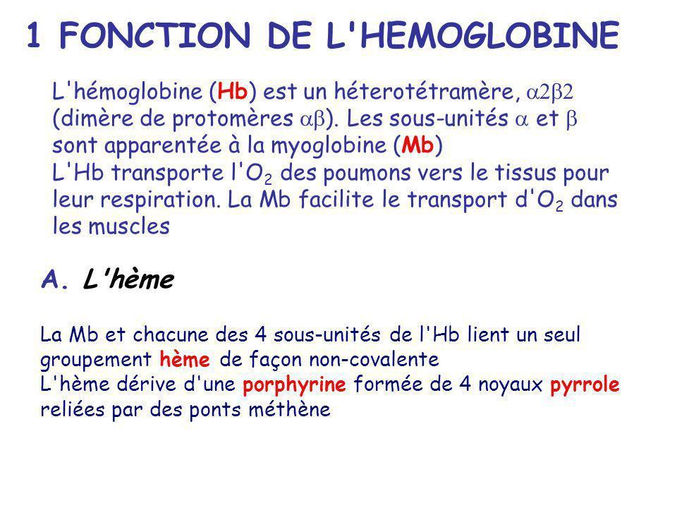 1 FONCTION DE L HEMOGLOBINE