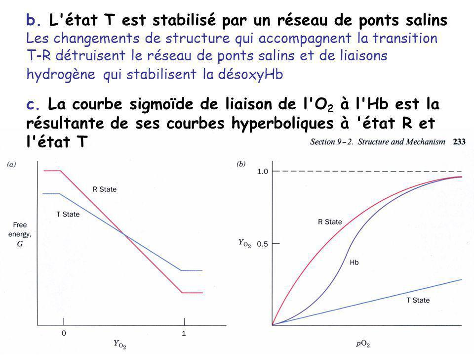 b. L état T est stabilisé par un réseau de ponts salins